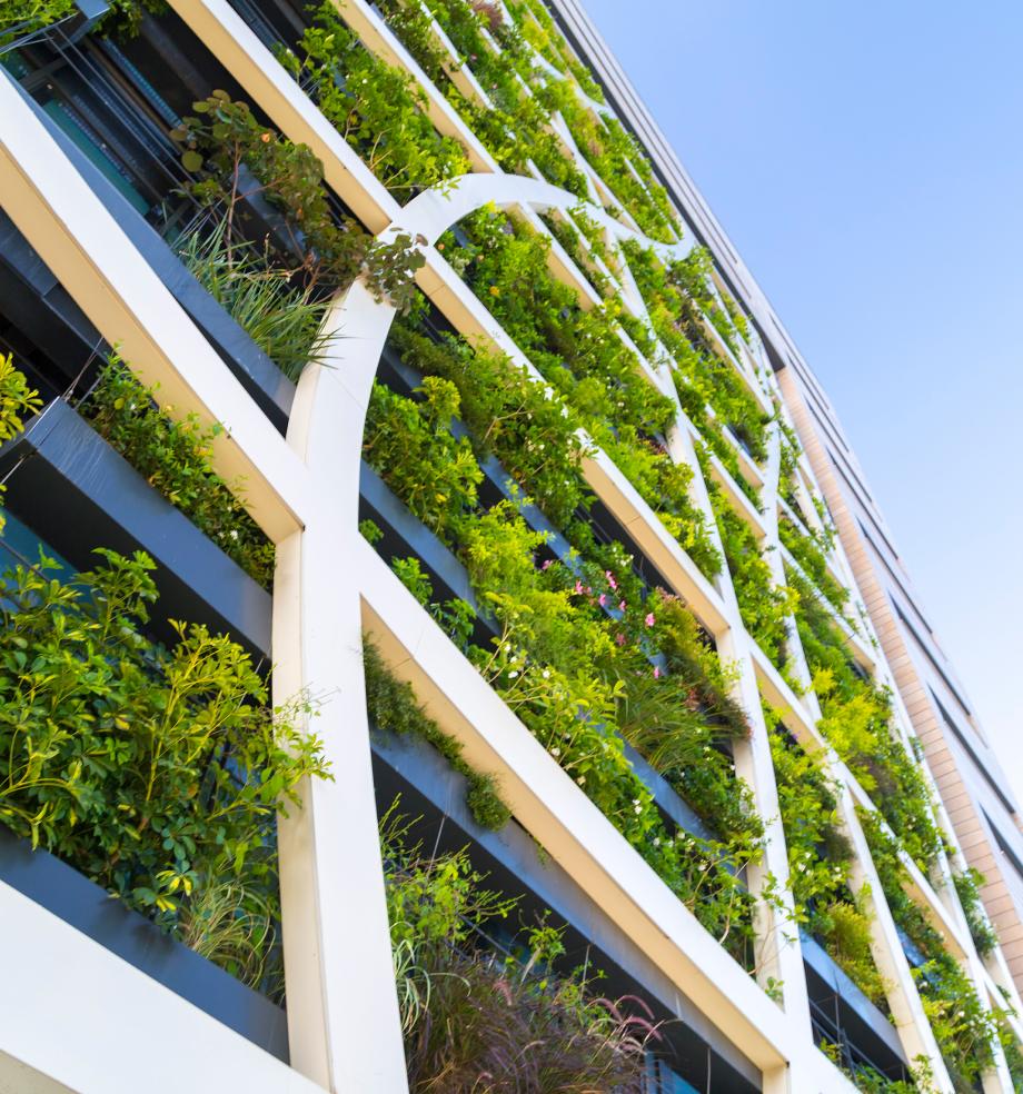 Pflanzenbesetzte Hausfassade